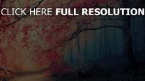 floraison arbre forêt fumée