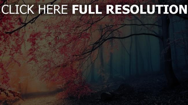 fond d'écran hd floraison arbre forêt fumée