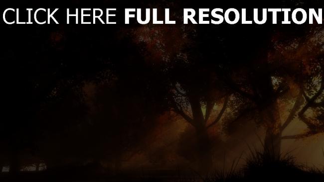 fond d'écran hd forêt jaune automne rayon