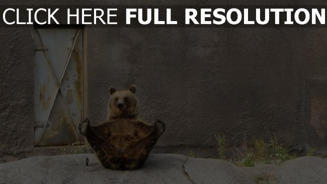 fond d'écran hd ours entraînement