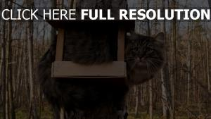 chat mangeoire automne