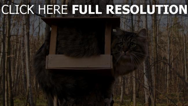 fond d'écran hd chat mangeoire automne