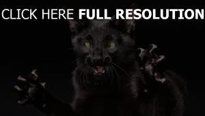 chat noir colère museau