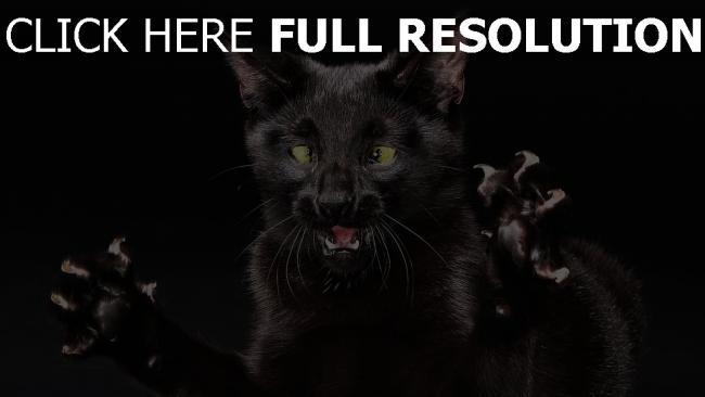 fond d'écran hd chat noir colère museau