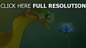 crapaud tropical papillon