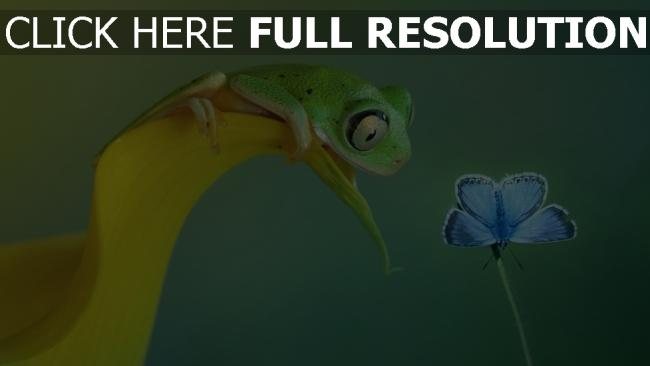 fond d'écran hd crapaud tropical papillon