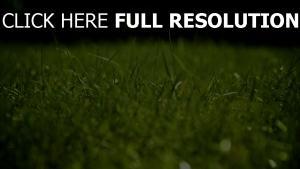 herbe gros plan arrière-plan flou