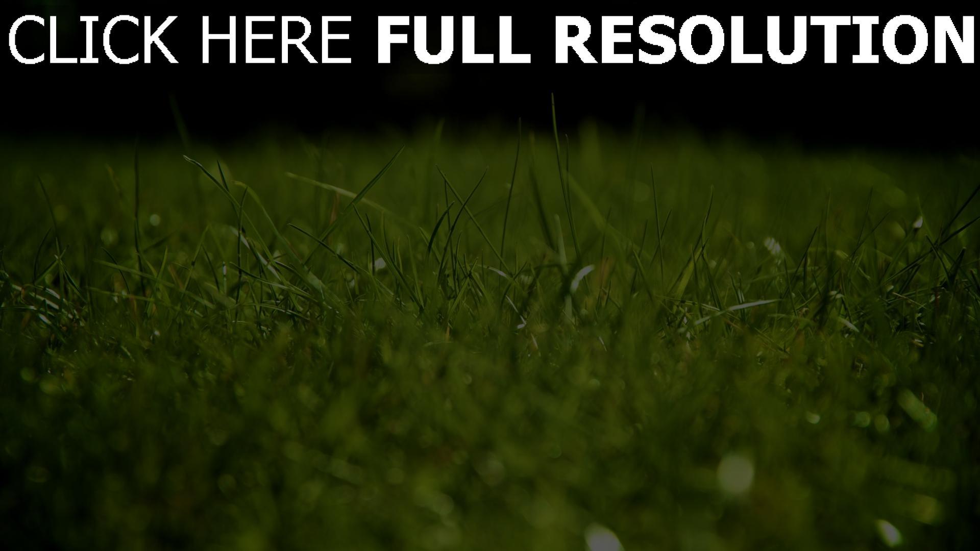 fond d'écran 1920x1080 herbe gros plan arrière-plan flou