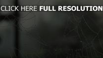 toile d'araignée goutte