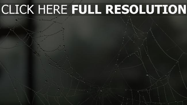 fond d'écran hd toile d'araignée goutte