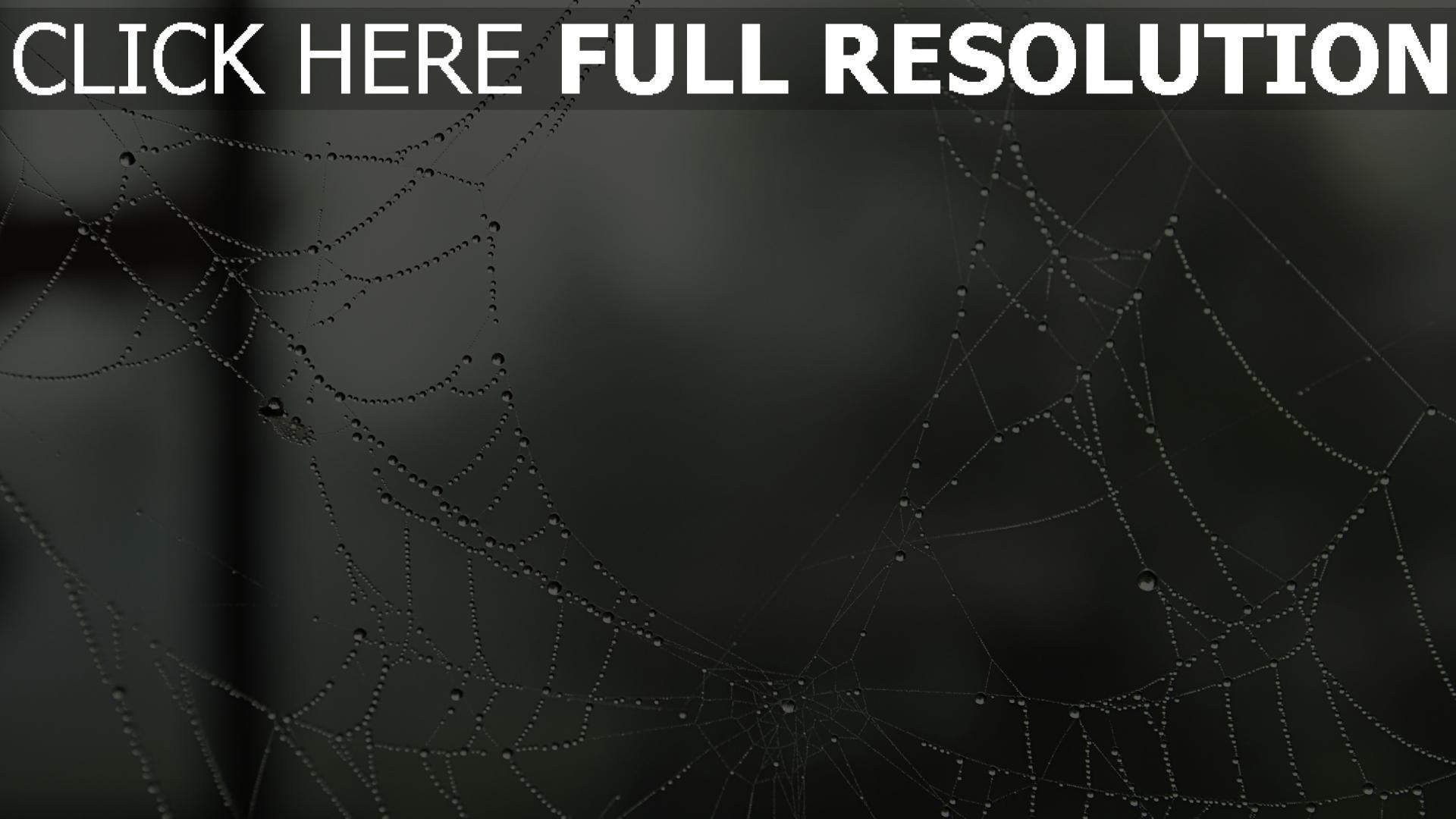 fond d'écran 1920x1080 toile d'araignée goutte