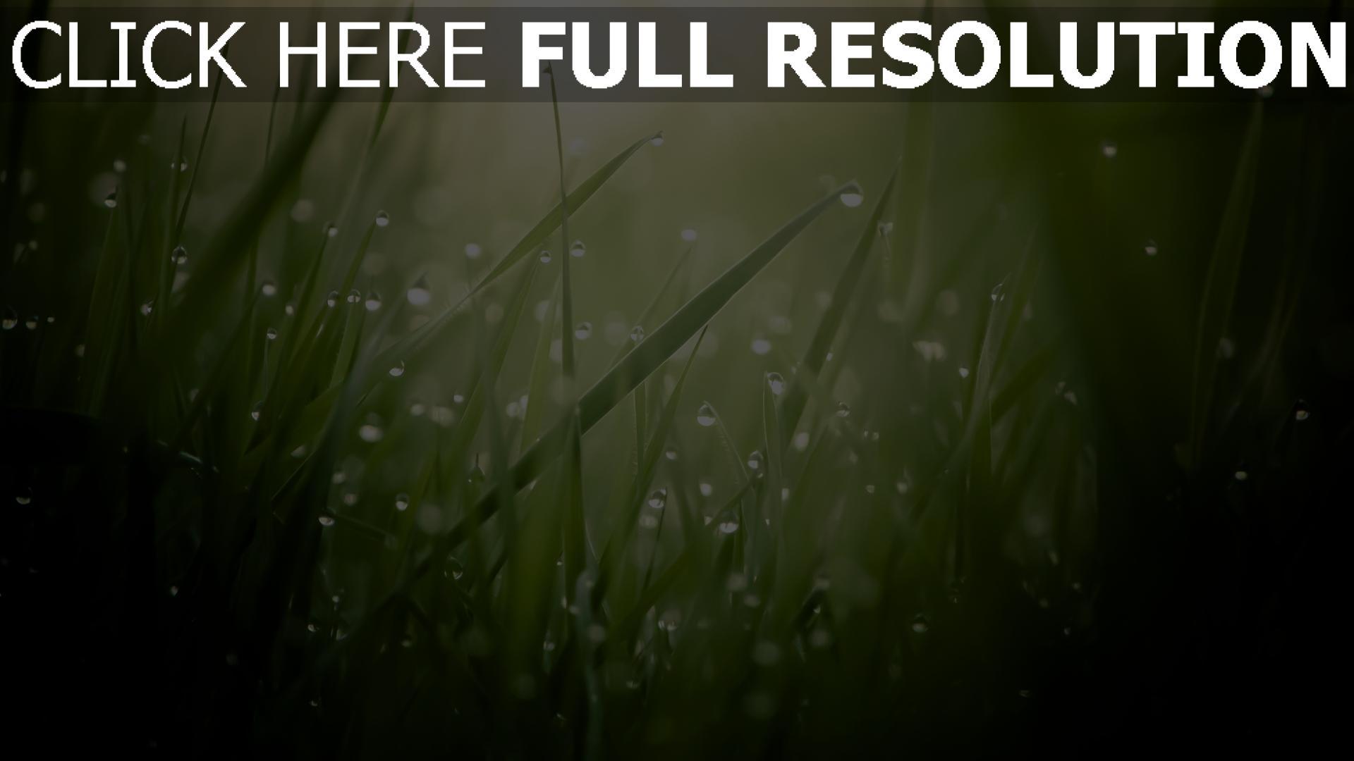 fond d'écran 1920x1080 herbe lever du soleil