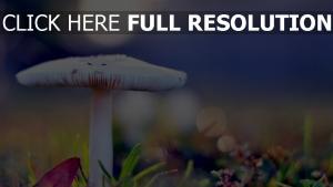 champignon toxique arrière-plan flou