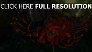 papillon pétale arrière-plan flou