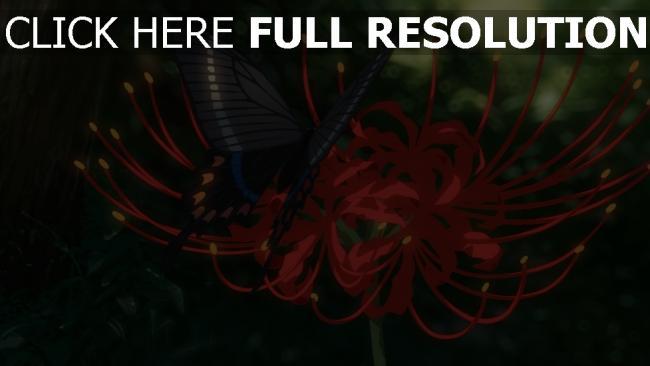 fond d'écran hd papillon pétale arrière-plan flou