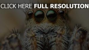 araignée yeux arrière-plan flou