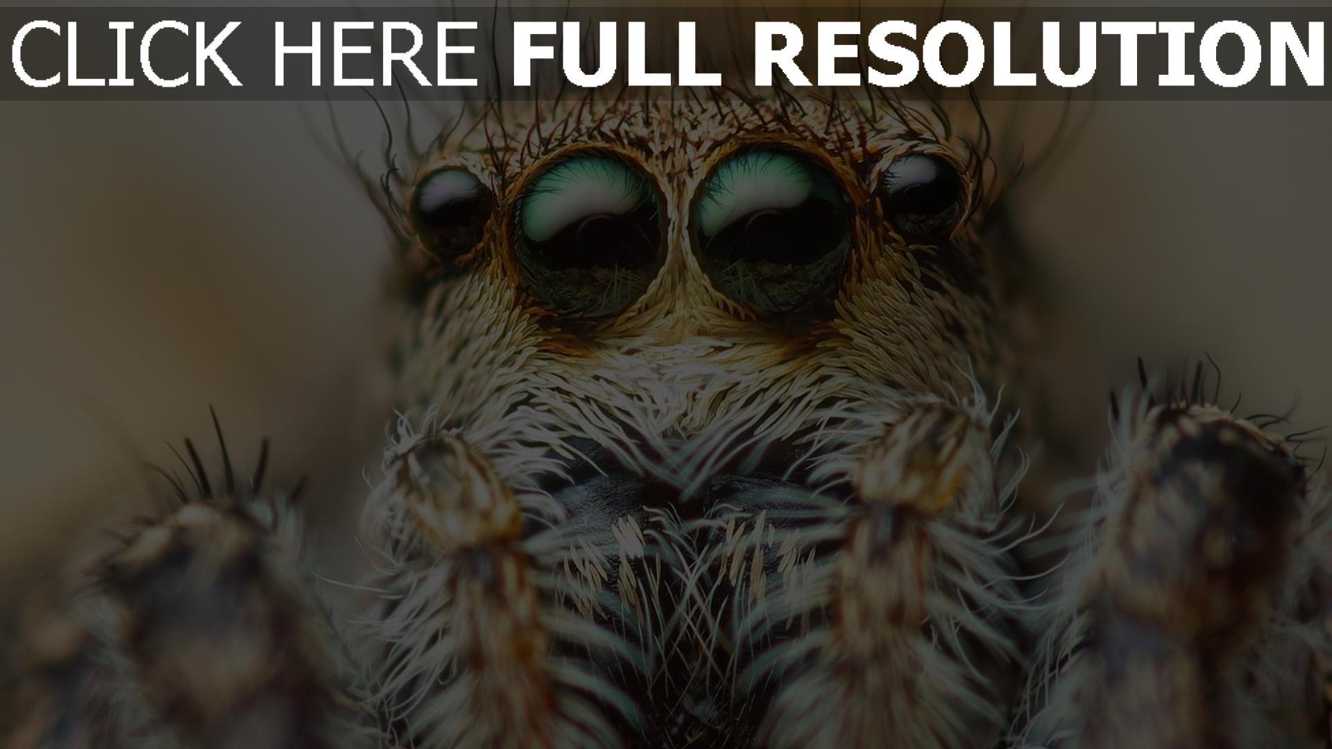 fond d'écran 1920x1080 araignée yeux arrière-plan flou