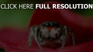 araignée regard