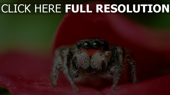 fond d'écran hd araignée regard