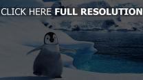 manchot bébé mignonne arctique