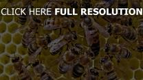 abeille rayon de miel