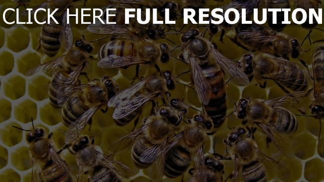 fond d'écran hd abeille rayon de miel