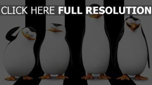 pingouins de madagascar vue de face noir et blanc