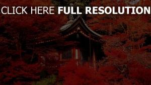 daigo-Ji toit rouge feuilles temple
