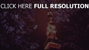 tour tokyo sakura nuit lumineux