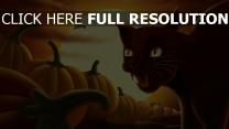 chat sifflement citrouille lune halloween