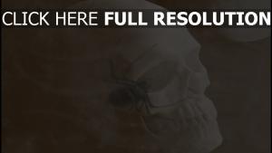 crâne araignée halloween