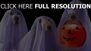 fantôme robe de fantaisie chien amusant