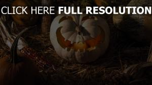 citrouille-lanterne sourire halloween champ