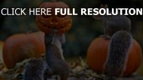écureuil masque citrouille-lanterne halloween