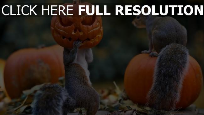 fond d'écran hd écureuil masque citrouille-lanterne halloween